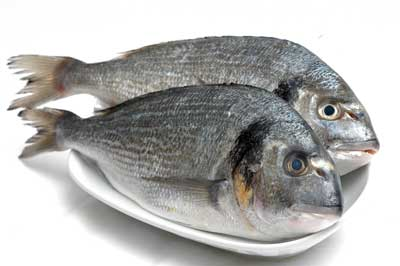 Taza Balık-Bayat Balık Göz farkı