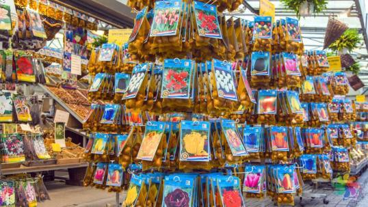 Amsterdam-Çiçek-Pazarı-lale-soğanı